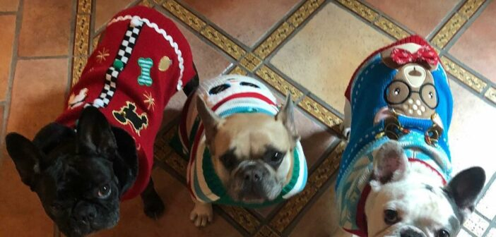 Lady Gaga ofrece 500,000 dólares de recompensa por los dos perros que le han robado.